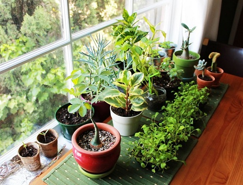 indoor air quality plants